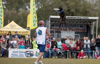 K-9 Frisbee Fun Invades Carlisle Truck Nationals